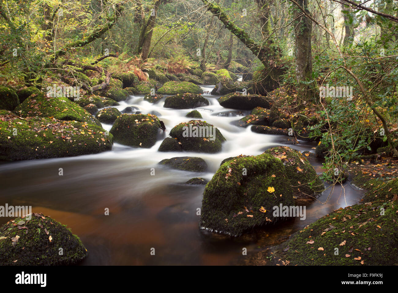 The river Bovey flowing through Lustleigh Cleave Dartmoor National Park Devon Uk - Stock Image