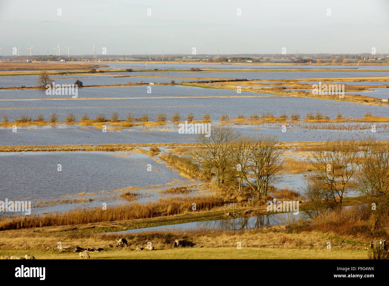 Alkborough Flats, Managed Realignment site, North Lincolnshire, England - Stock Image