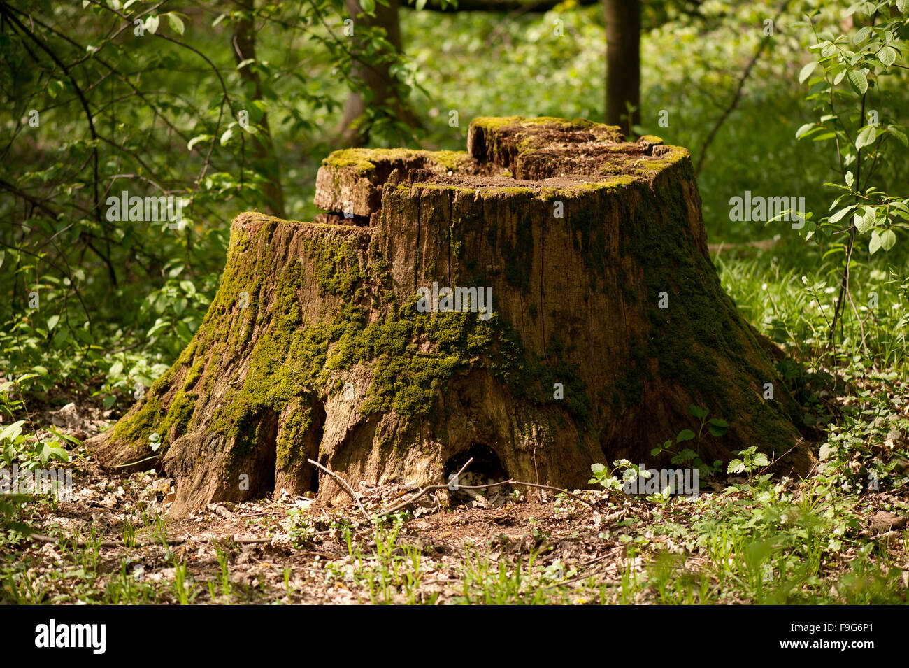 Tree Stump High Resolution Stock Photography and Images - Alamy