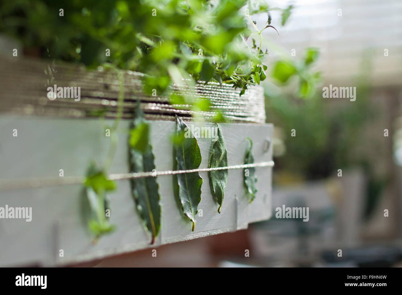 hand made decorated box with herbs - Stock Image