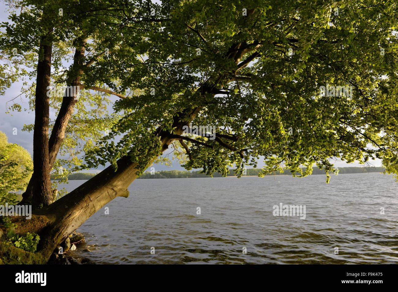 drawsko lake (jezioro drawsko), pomeranian lakeland (pojezierze pomorskie), west pomerania, poland Stock Photo