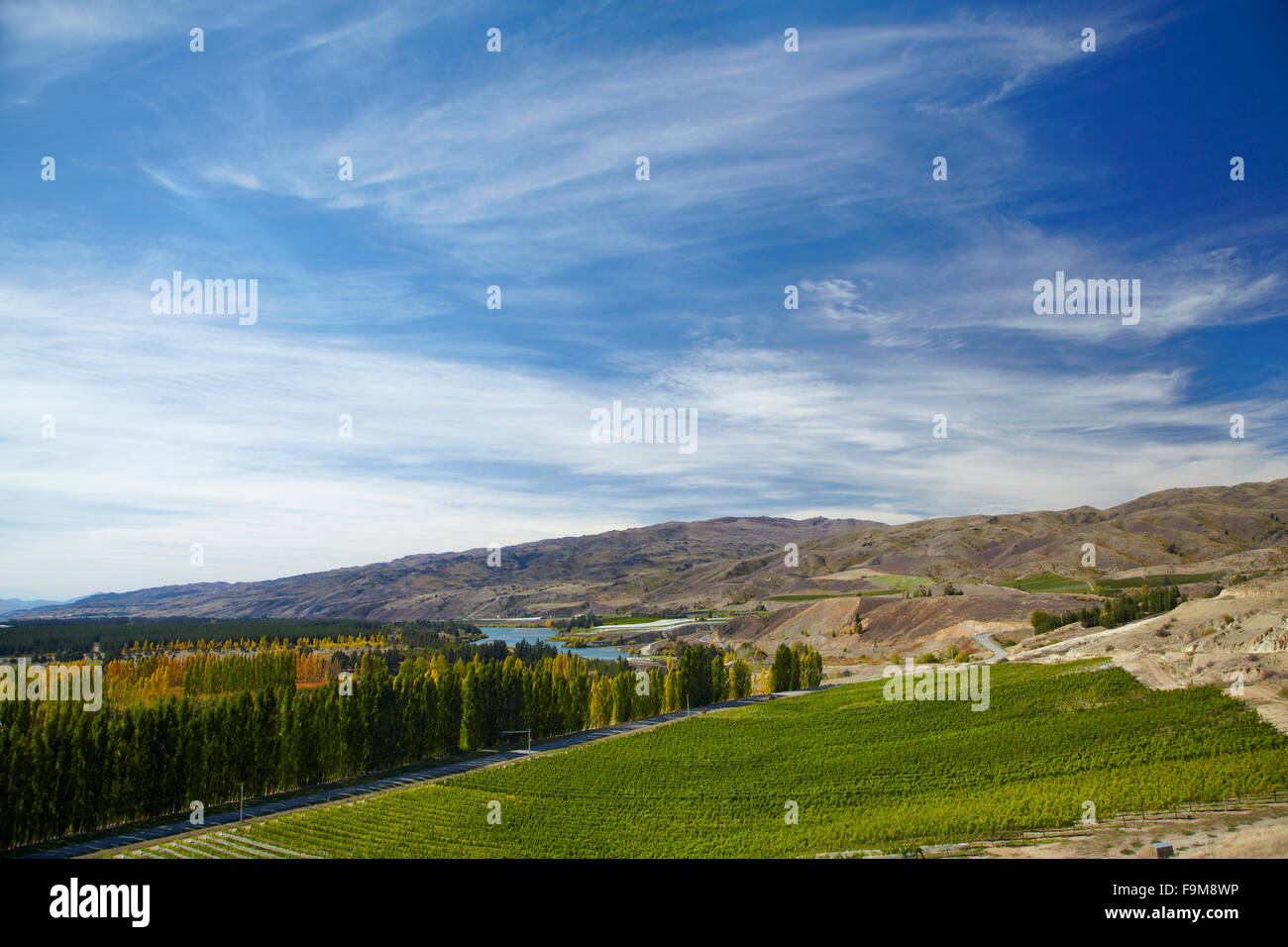 Mt Difficulty Vineyards and orchards, Bannockburn, near Cromwell, Central Otago, South Island, New Zealand Stock Photo