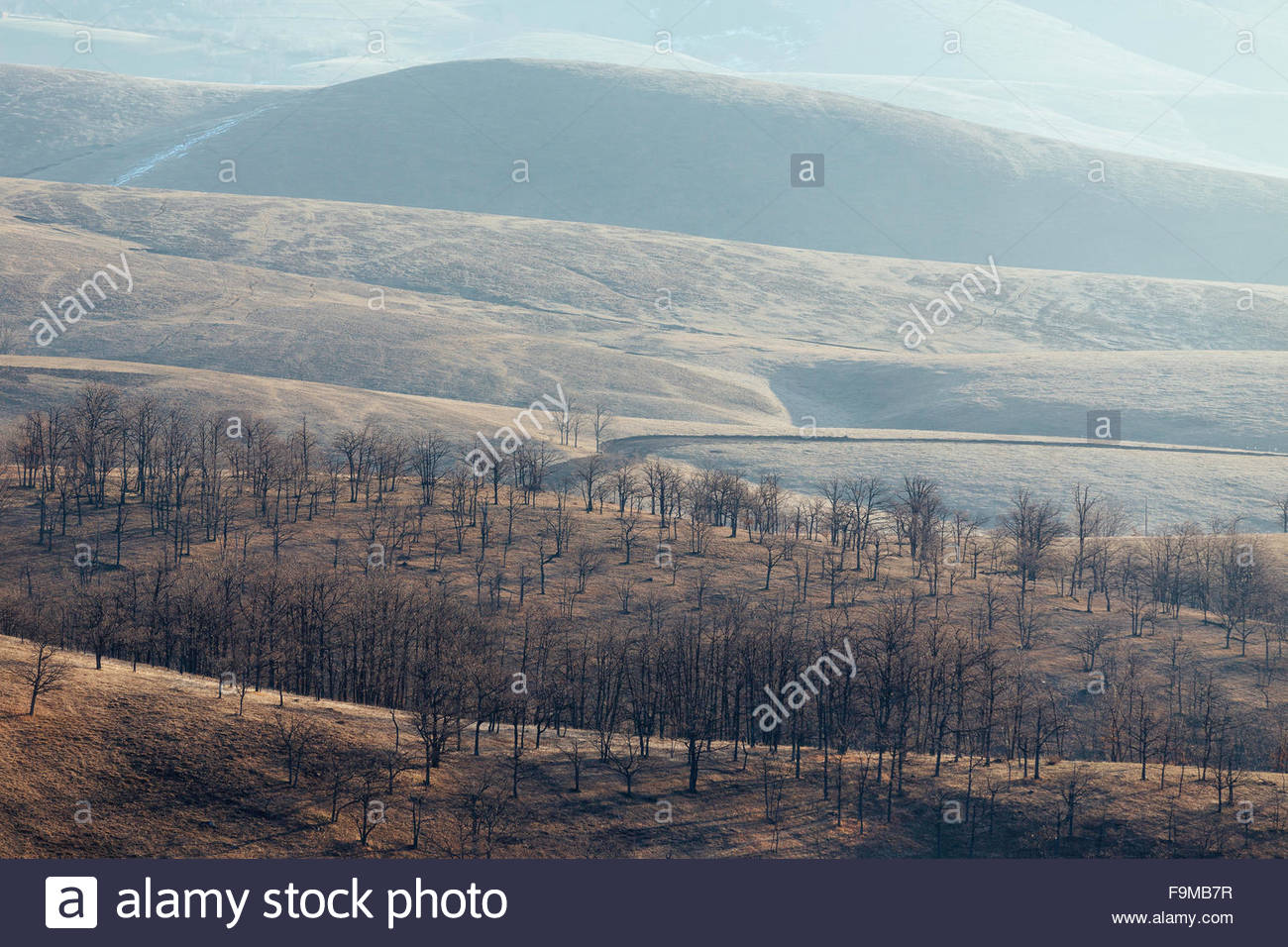 Beautiful Serbian pastures in the Zlatibor mountains - Stock Image