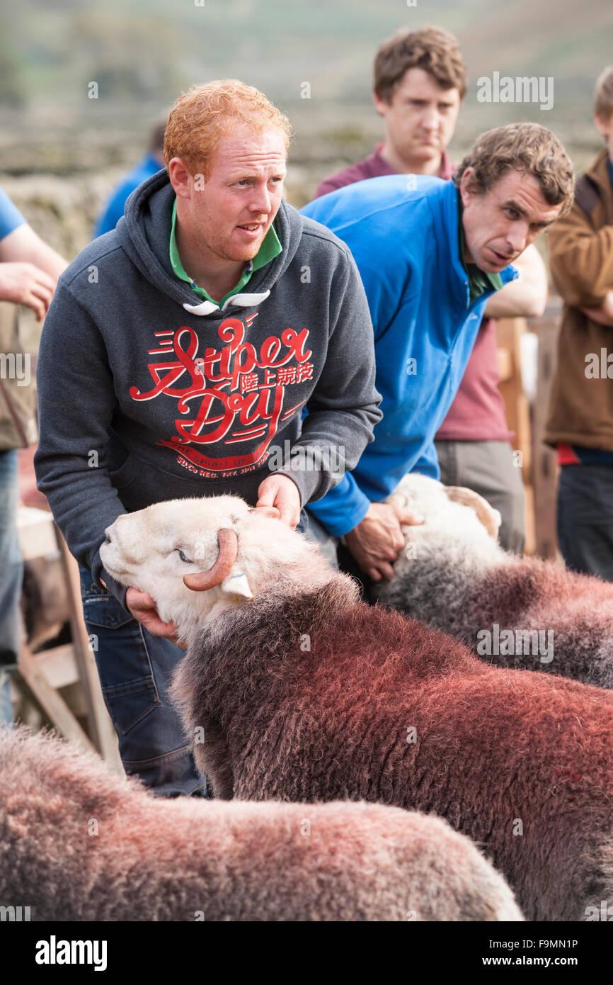 Shepherds showing his Herdwick Sheep at the Wasdale Head Shepherd's Meet, Cumbria, England, UK - Stock Image