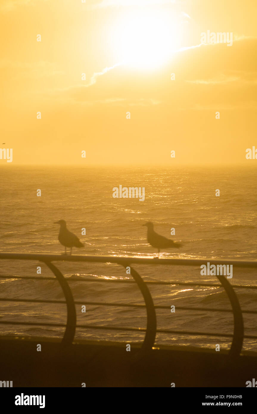 Blackpool, UK. 17th December 2015. With the unusually warm winter weather continuing there was a bonus in Blackpool - Stock Image