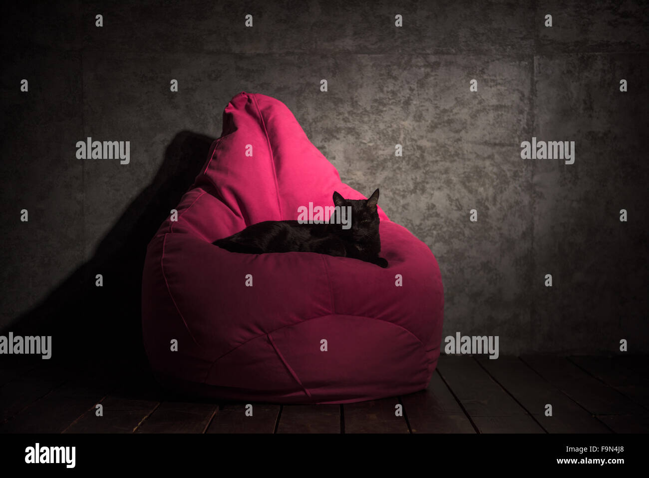 Cat and Beanbag at home or office - Stock Image