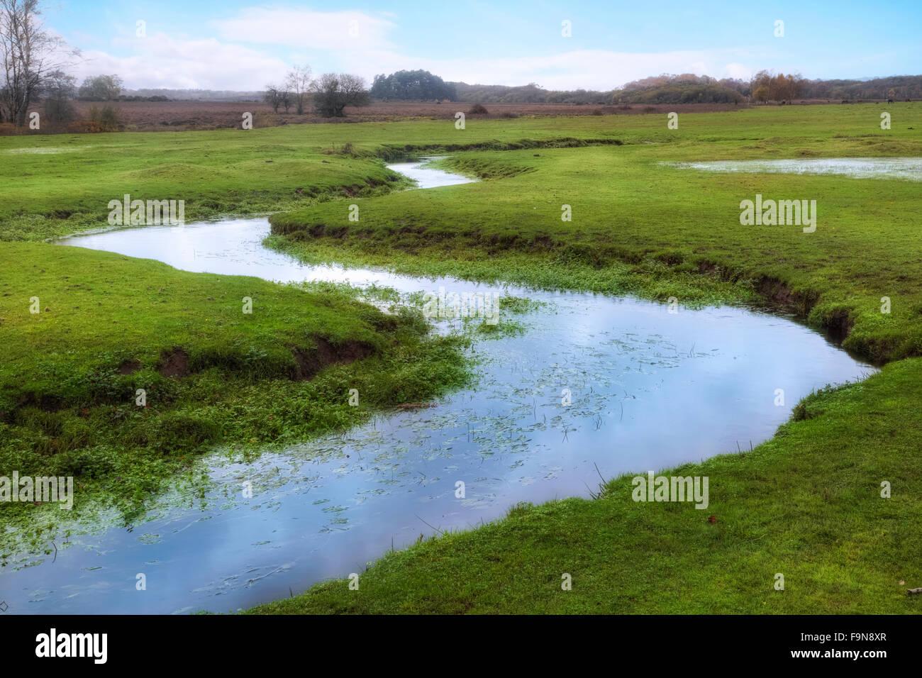 Longwater Lawn, New Forest, Lyndhurst, Hampshire, England, UK - Stock Image