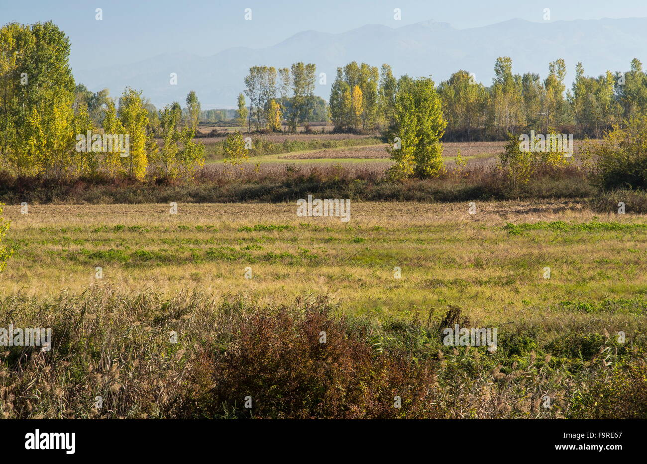 Attractive mixed marshy pastoral bird-rich countryside below Lake Kerkini, north-east Greece. - Stock Image