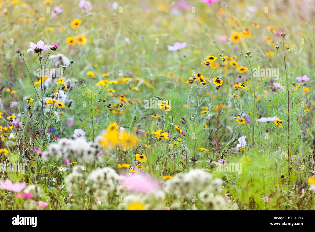 Summer Wild Meadow Flowers - Stock Image