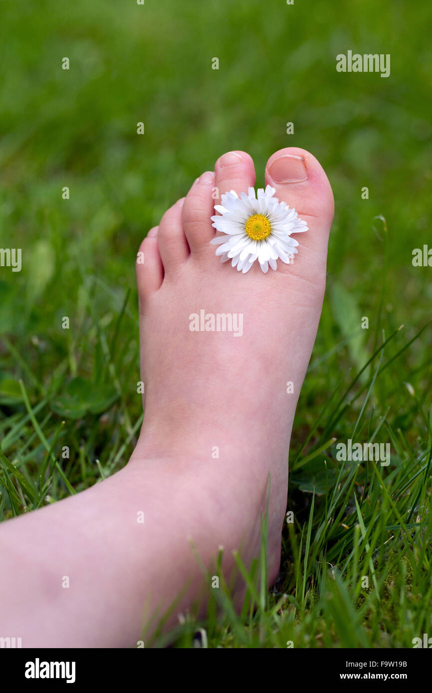 Common daisy / lawn daisy (Bellis perennis) flower between toes of child's foot - Stock Image