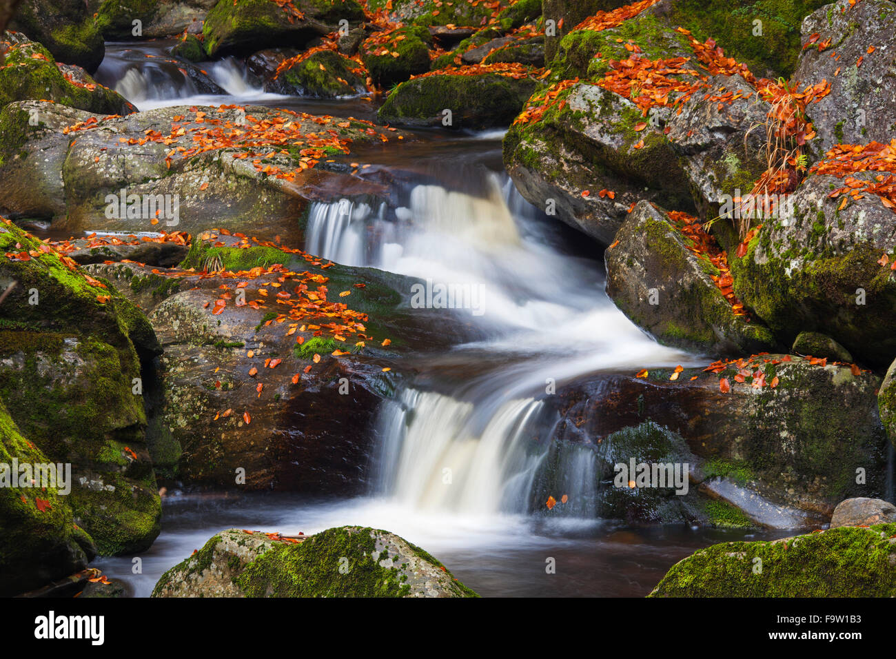 Waterfalls on the Große Ohe river which flows through the Steinklamm valley, Bavarian Forest National Park, - Stock Image