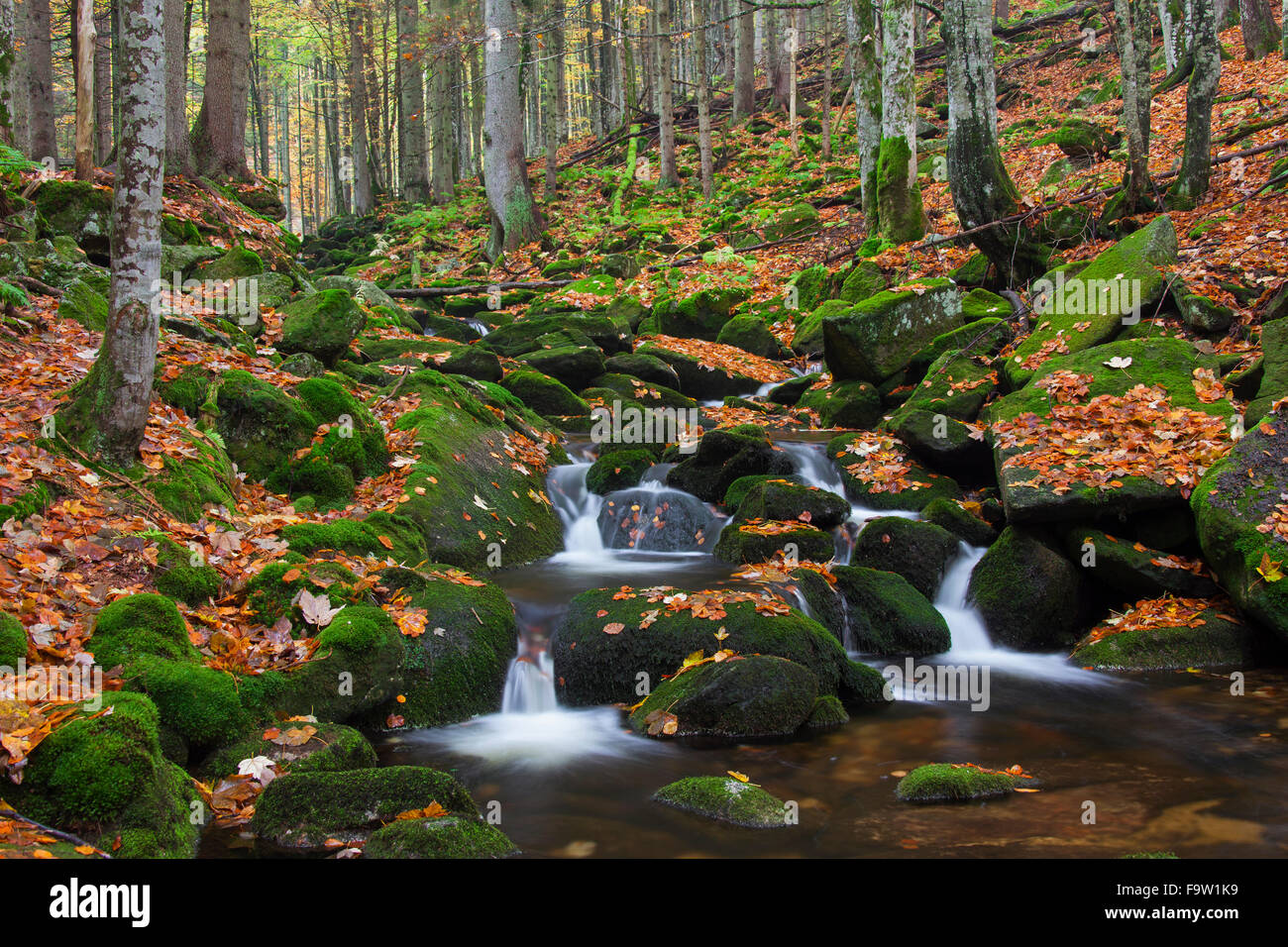 Waterfall on the Kleine Ohe / Grafenauer Ohe river in deciduous woodland, Bavarian Forest National Park, Bavaria, - Stock Image