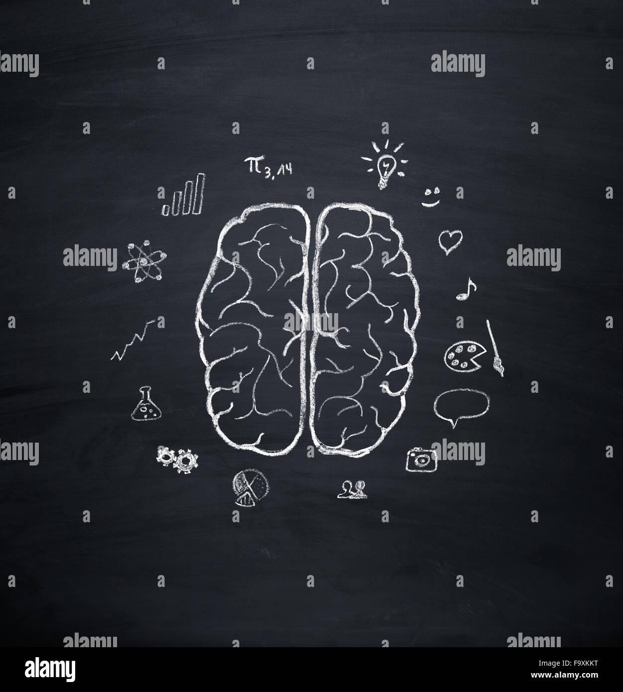 Brain hemisphere model - Stock Image