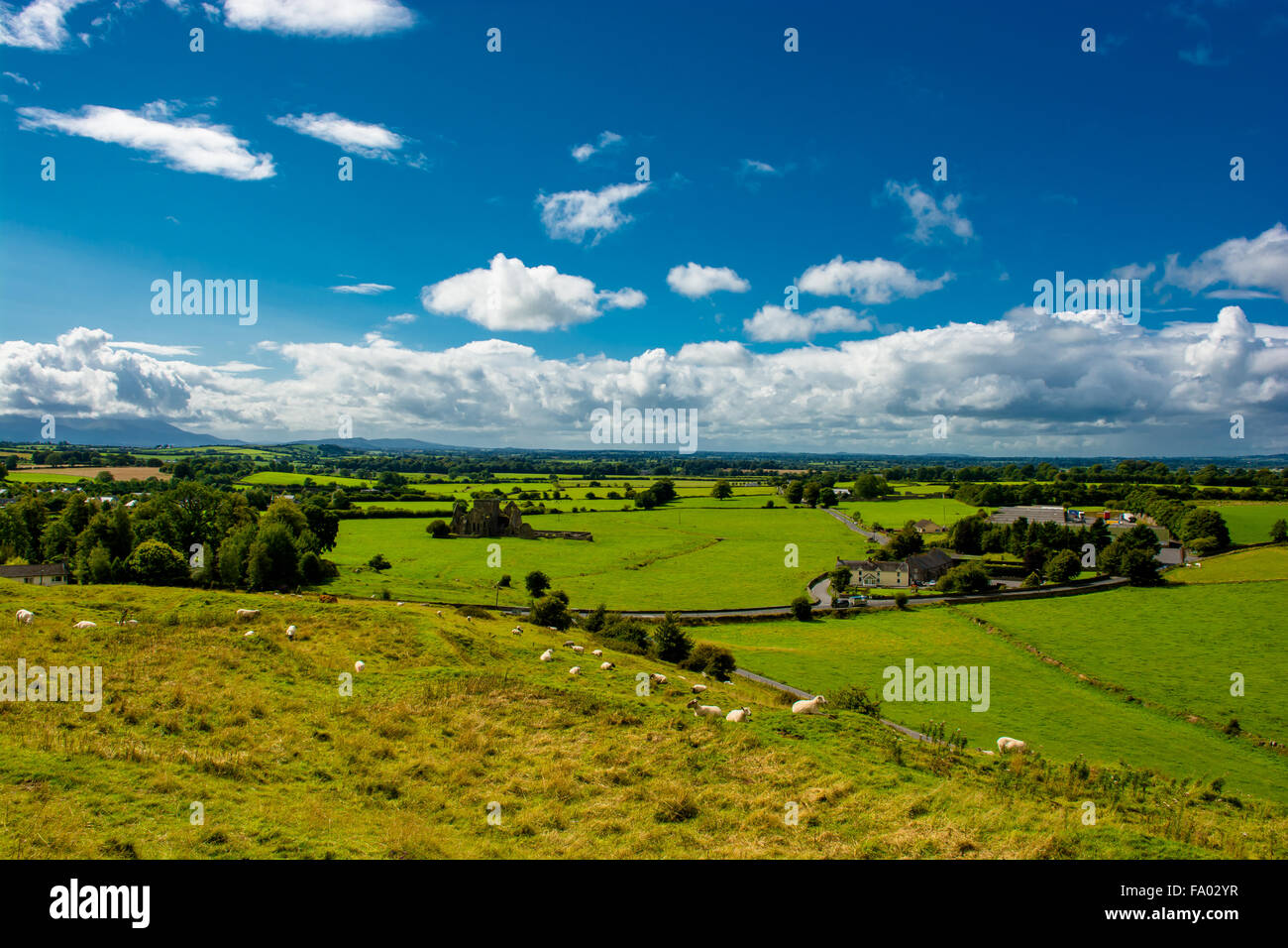 Herd Of Cattle In Landscape Of Tipperary In Ireland - Stock Image