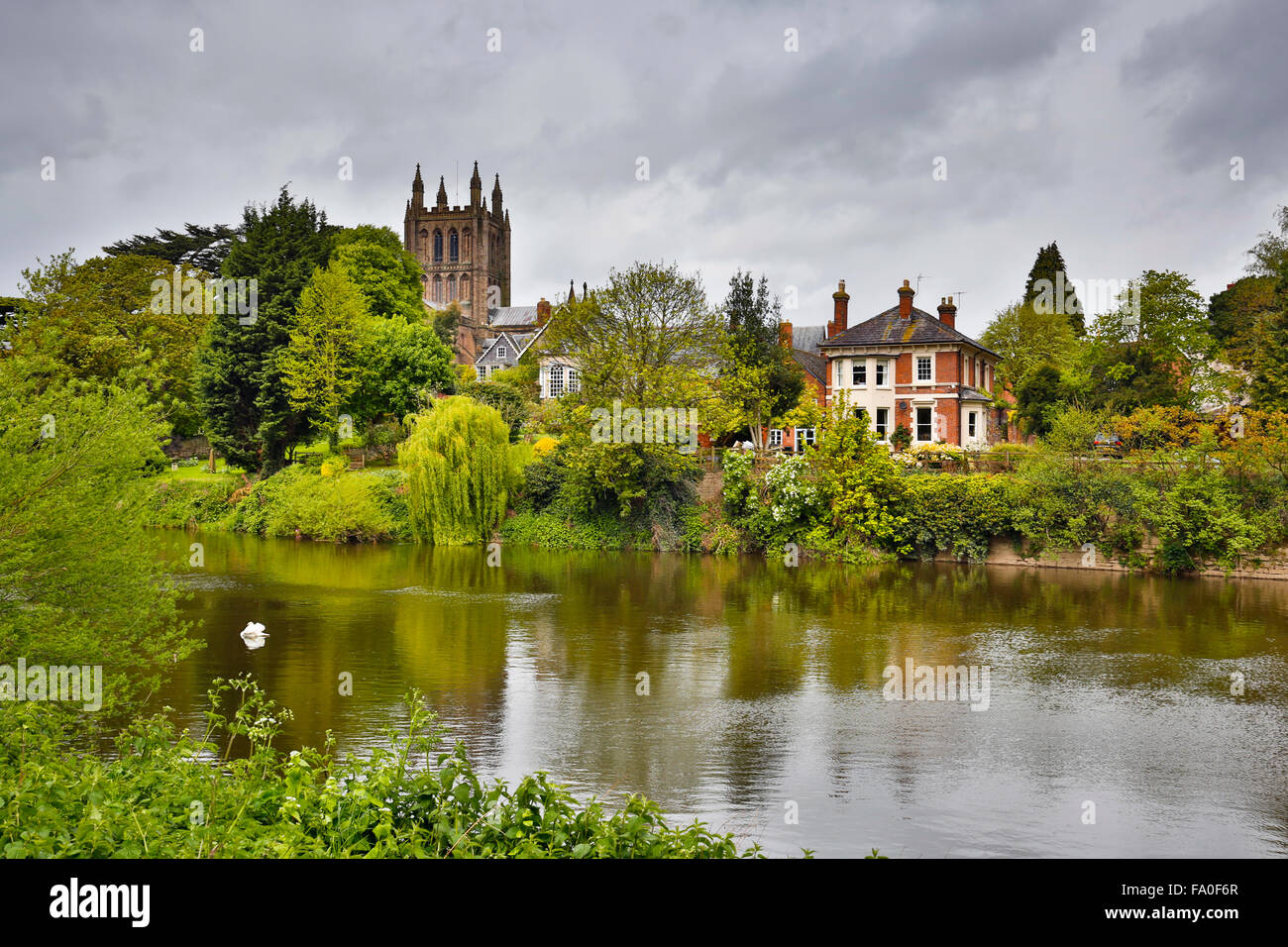 Hereford; River Wye and Cathedral; UK - Stock Image