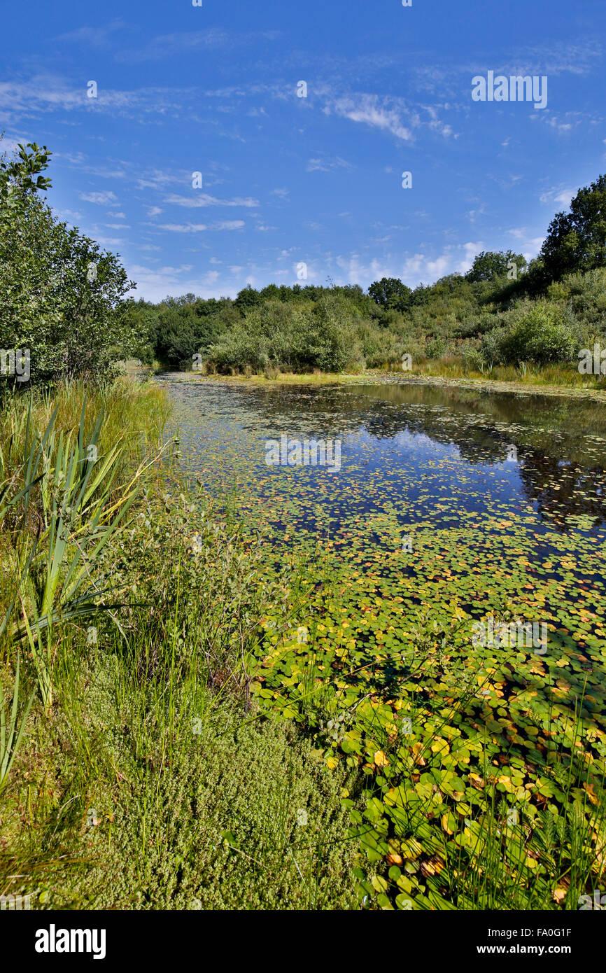 Little Bradley Ponds; Devon Wildlife Trust Reserve; Devon; UK - Stock Image