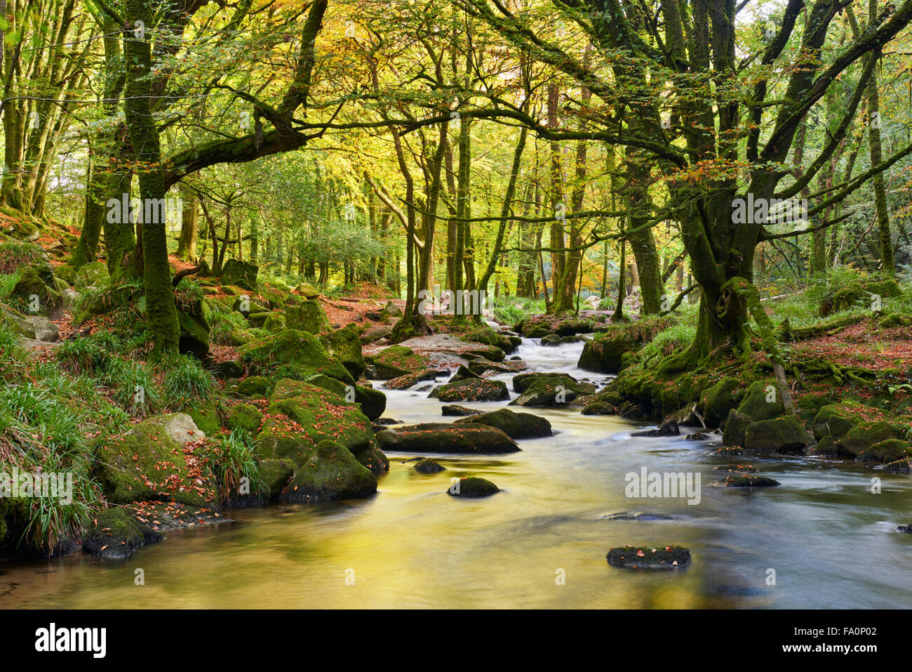 Start of autumn at Golitha Falls River Fowey - Stock Image