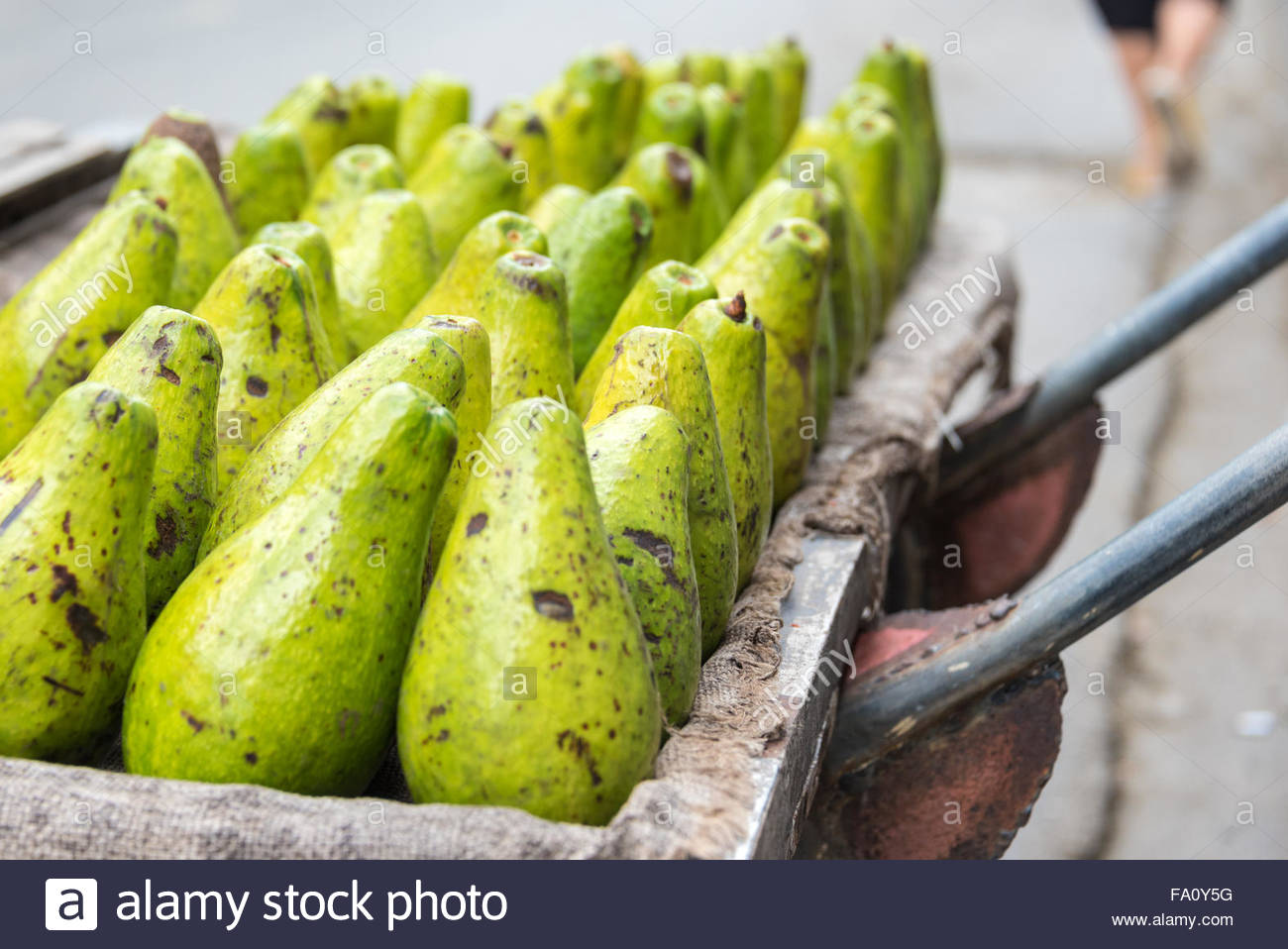 Avocados arranged in cart for sale at Sunday free market in Santa Clara, Cuba.  The Cuban government reforms permit - Stock Image