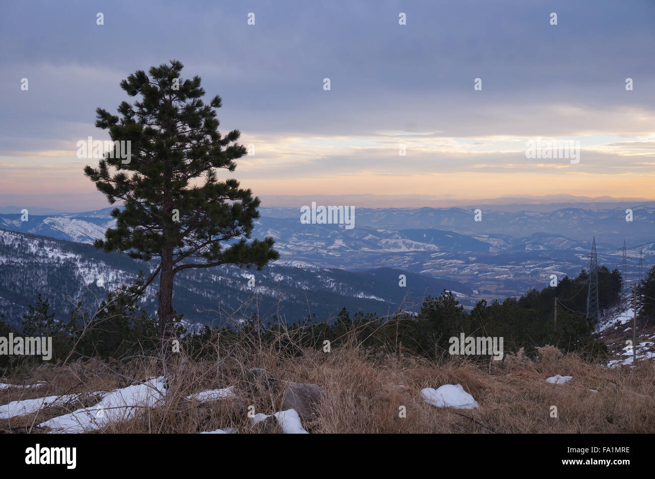 Sunset on Zlatibor mountain. One tree at tom of the hill - Stock Image