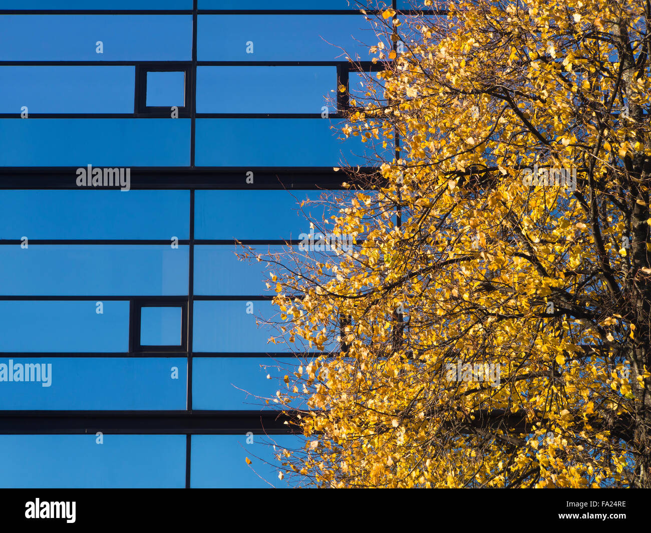 Blue sky reflected in commercial glass facade, yellow birch foliage in autumn, a sunny day in Oslo Norway Stock Photo