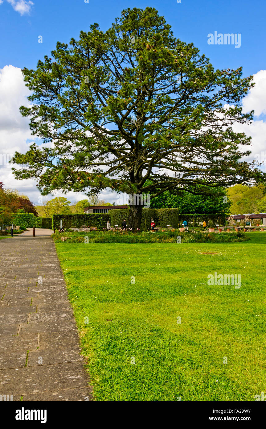 A wide paved path and mown lawn lead towards a large old tree surrounded by an area of natural garden in front of - Stock Image