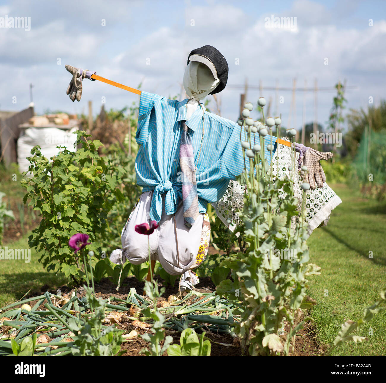 A Scarecrow Guarding an Allotment Plot and Vegetables - Stock Image