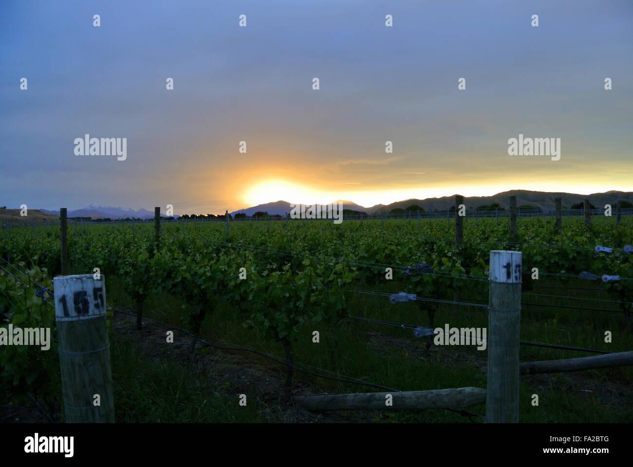 Top 5 Marlborough Wineries & Cellar Doors