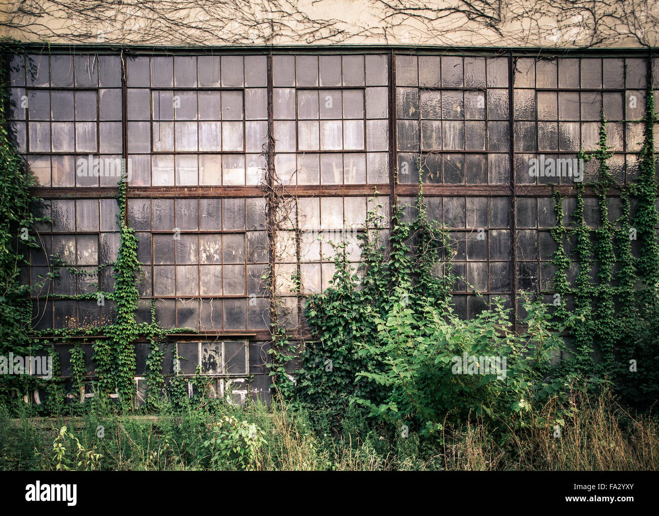 Grungy old industrial exterior with windows and overgrown vines and weeds - Stock Image