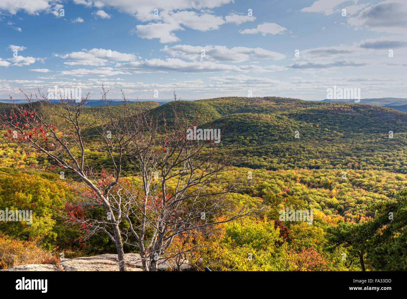Autumn leaves cling to a tree on a South-looking Bear Mountain viewpoint, in Mountain State Park, New York - Stock Image