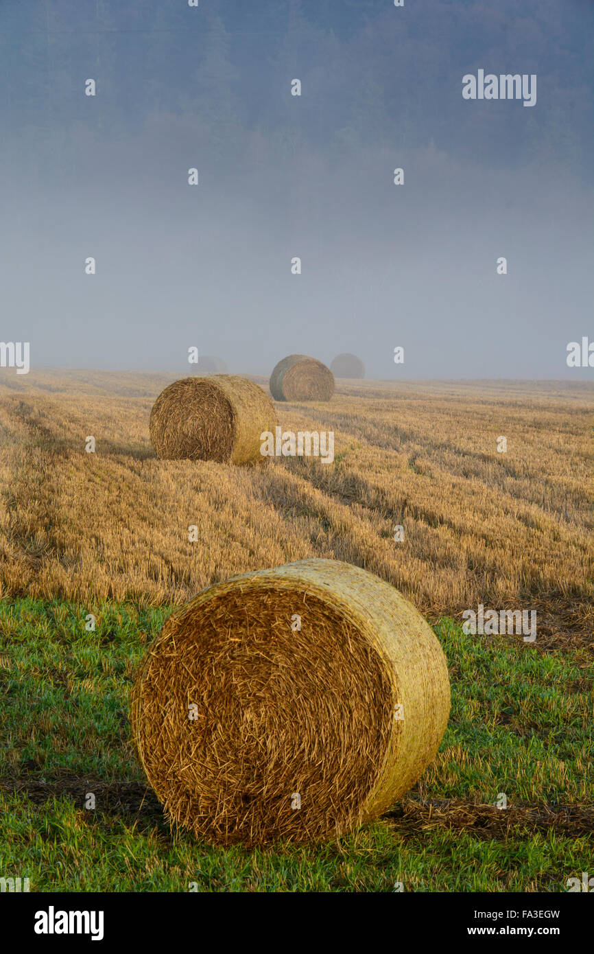 Hay bails and fog - Stock Image