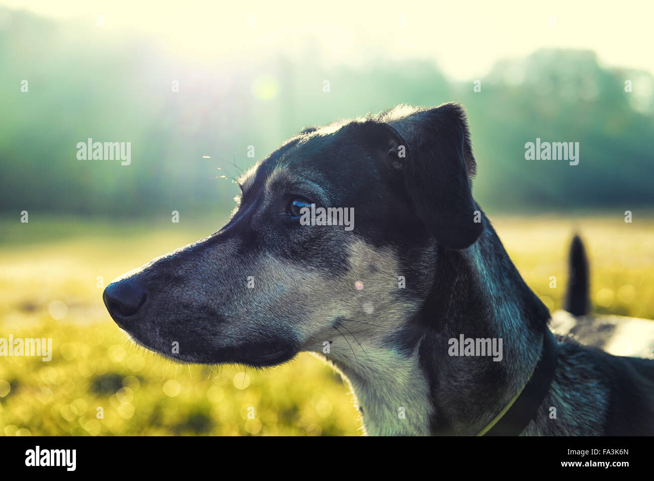 Dog portrait with luminous blurred background - Stock Image