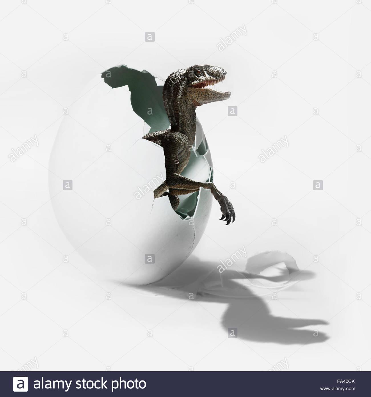 Juvenile velociraptor dinosaur breaks out of an egg. - Stock Image