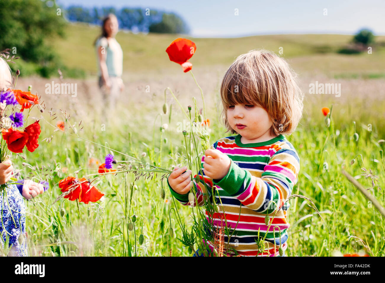 Cute girl holding poppy flowers at grassy field - Stock Image