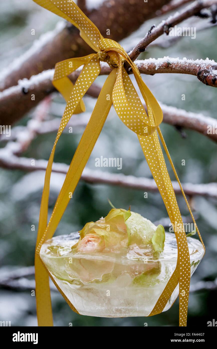 Material  Plastic bowl 83e550fd9