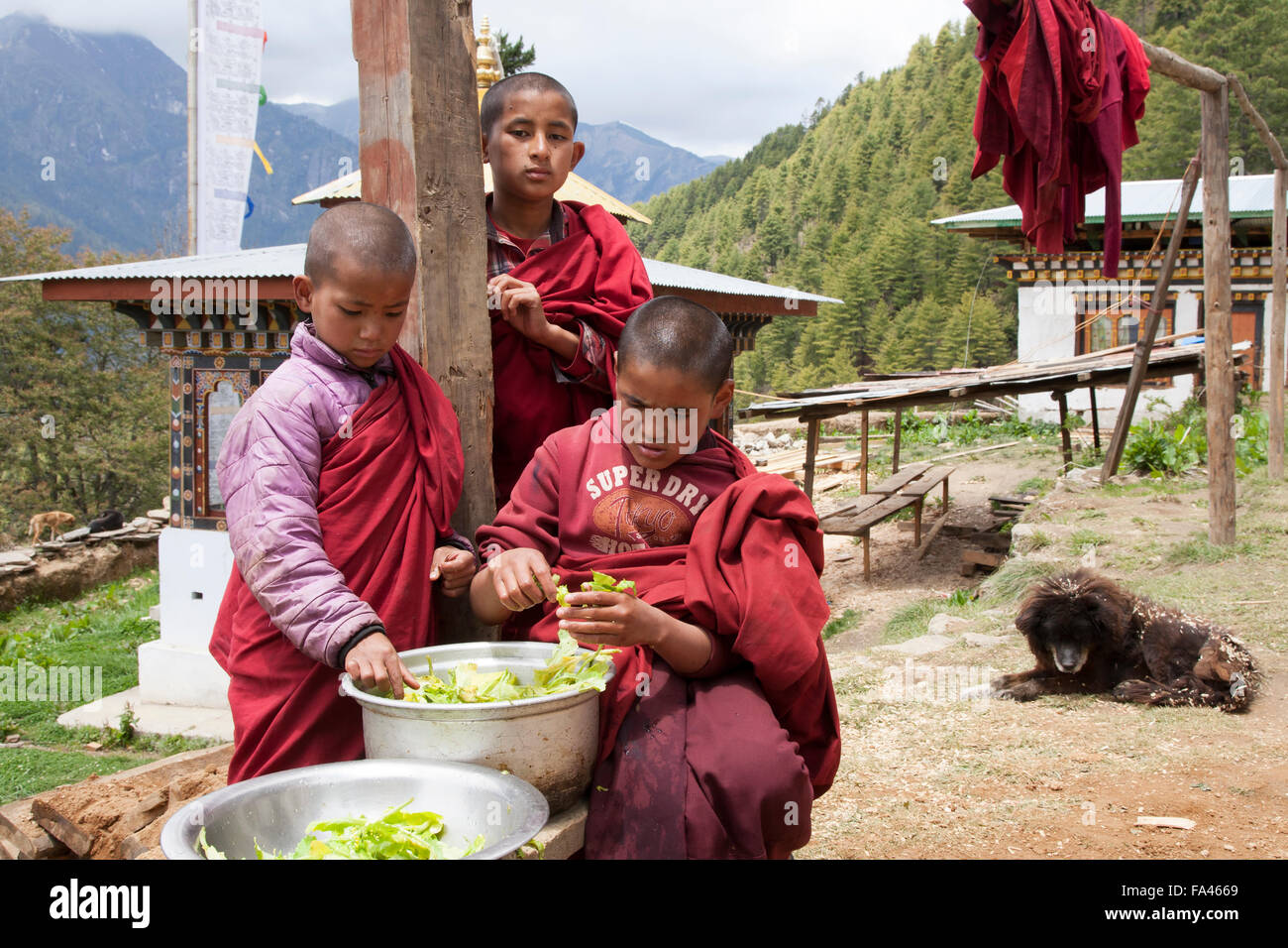 Young Buddhist monks in Haa - Stock Image