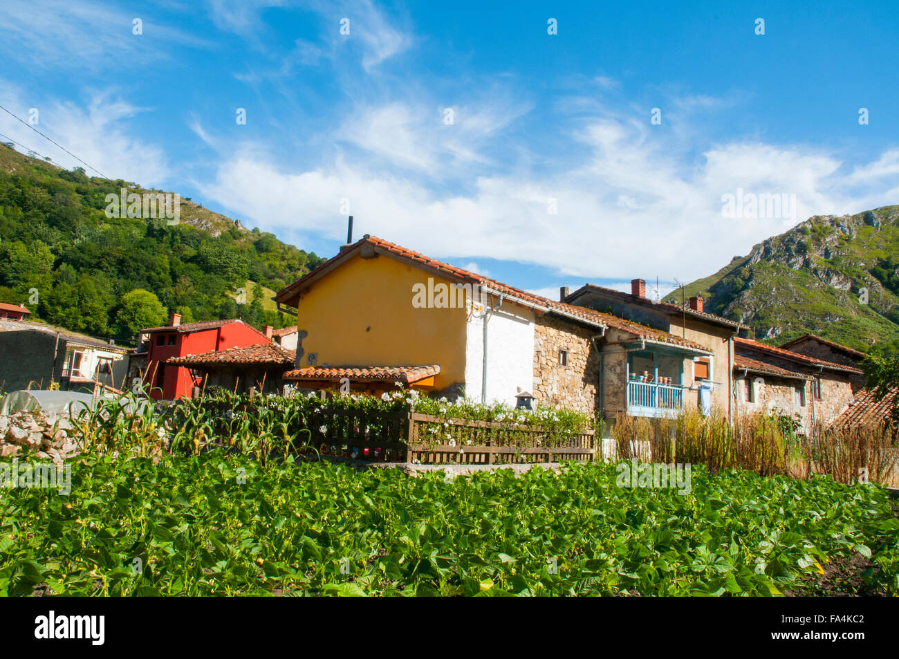 Market garden and houses. Espinaredo, Asturias, Spain. - Stock Image