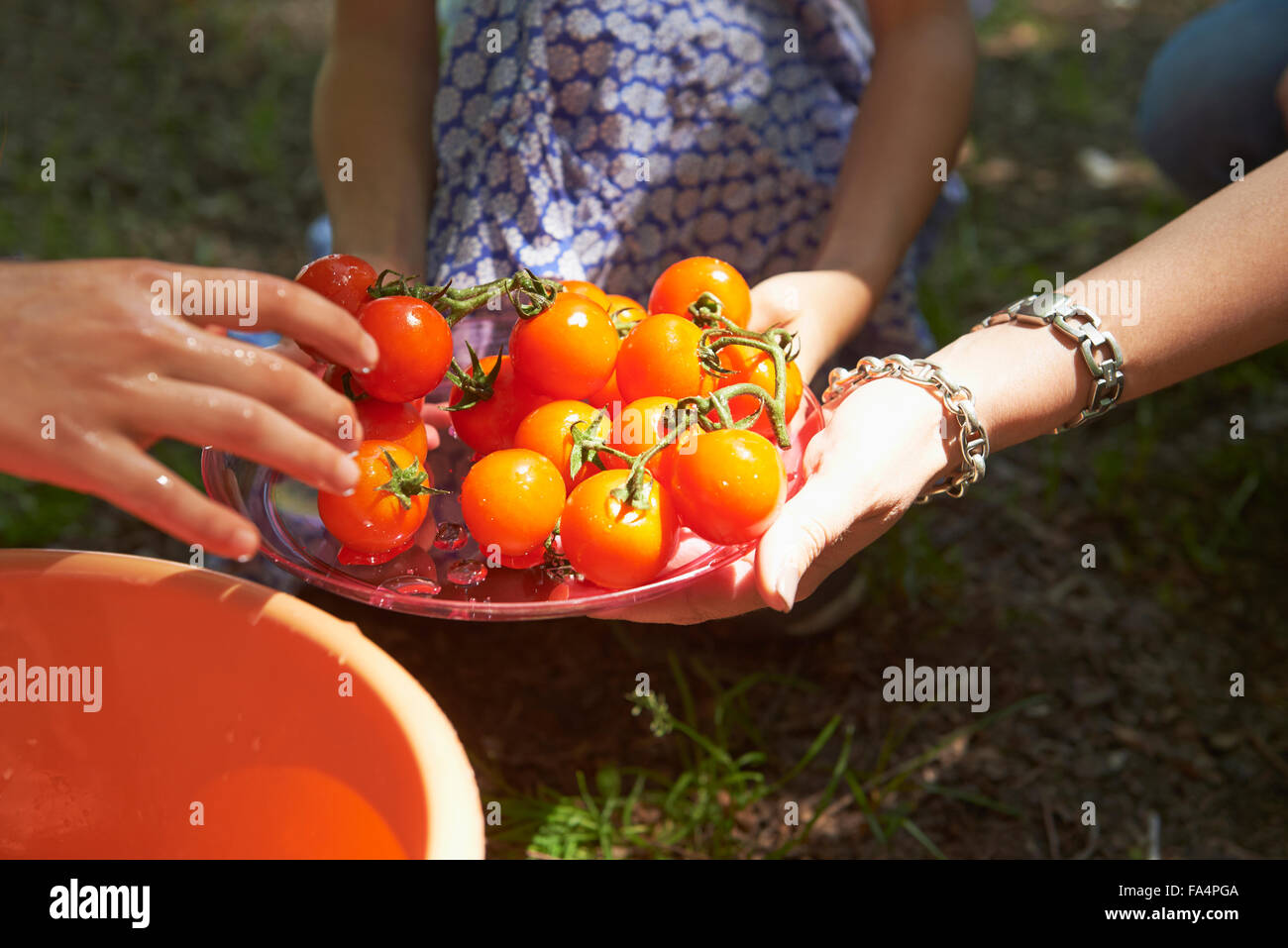 Close-up of friends washing cherry tomatoes at picnic, Munich, Bavaria, Germany - Stock Image