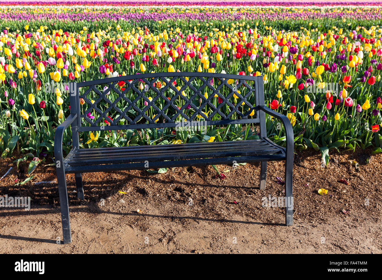 Cool A Black Metal Bench Next To Rows Of Colorful Springtime Evergreenethics Interior Chair Design Evergreenethicsorg