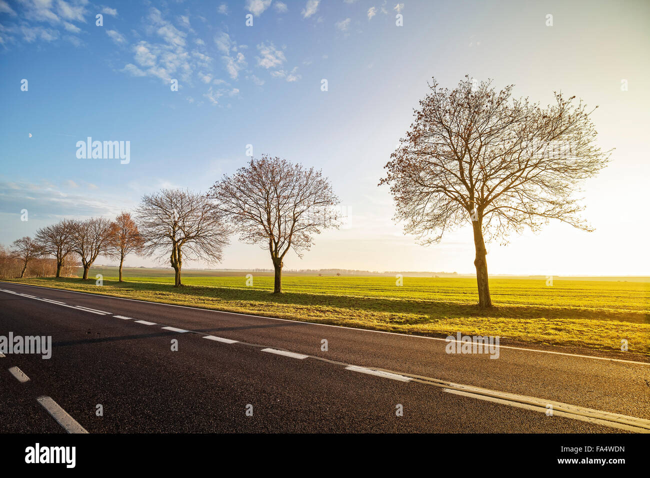 Empty countryside road with leafless trees at sunset. - Stock Image