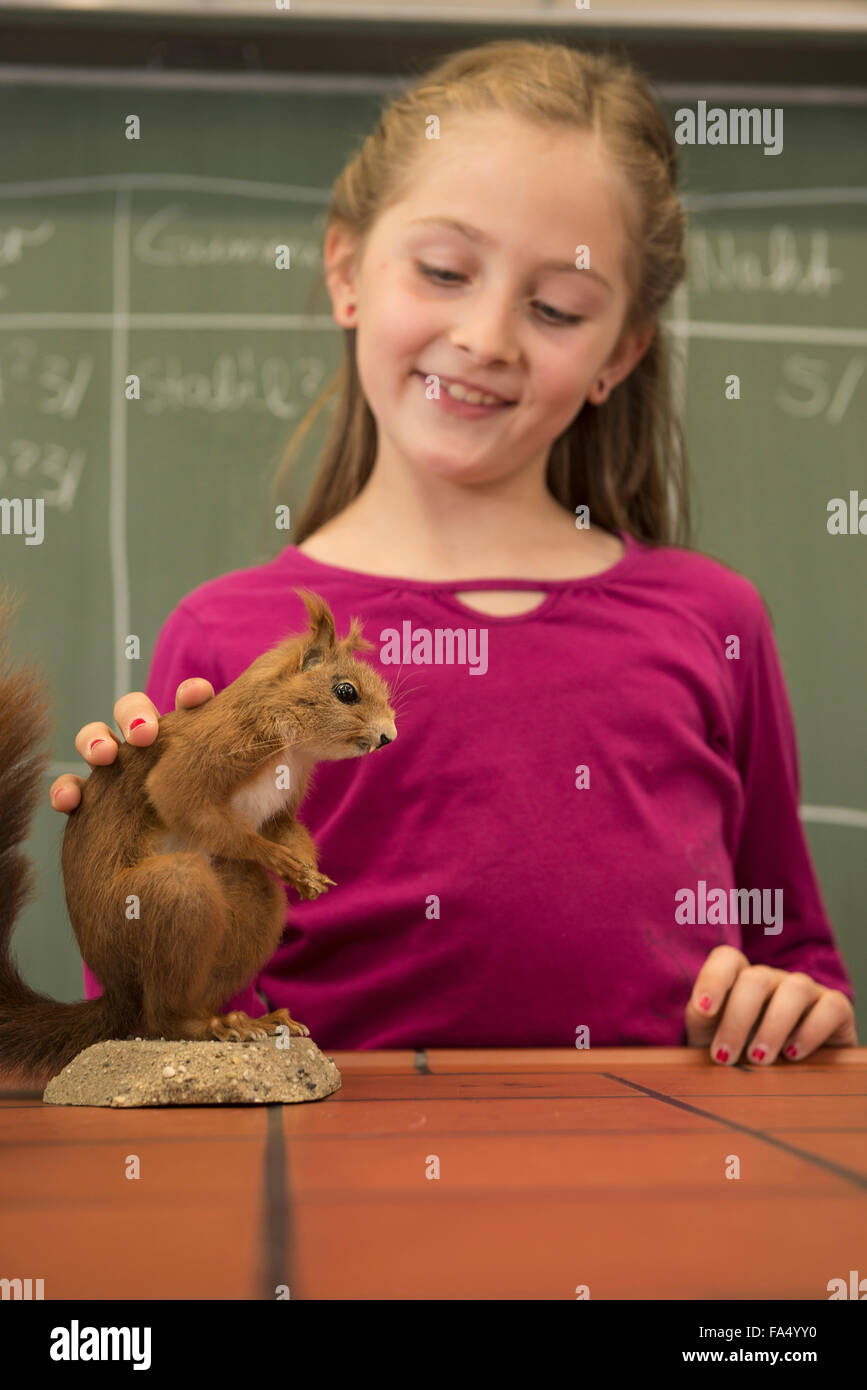 Schoolgirl examining a squirrel in biology class, Fürstenfeldbruck, Bavaria, Germany - Stock Image