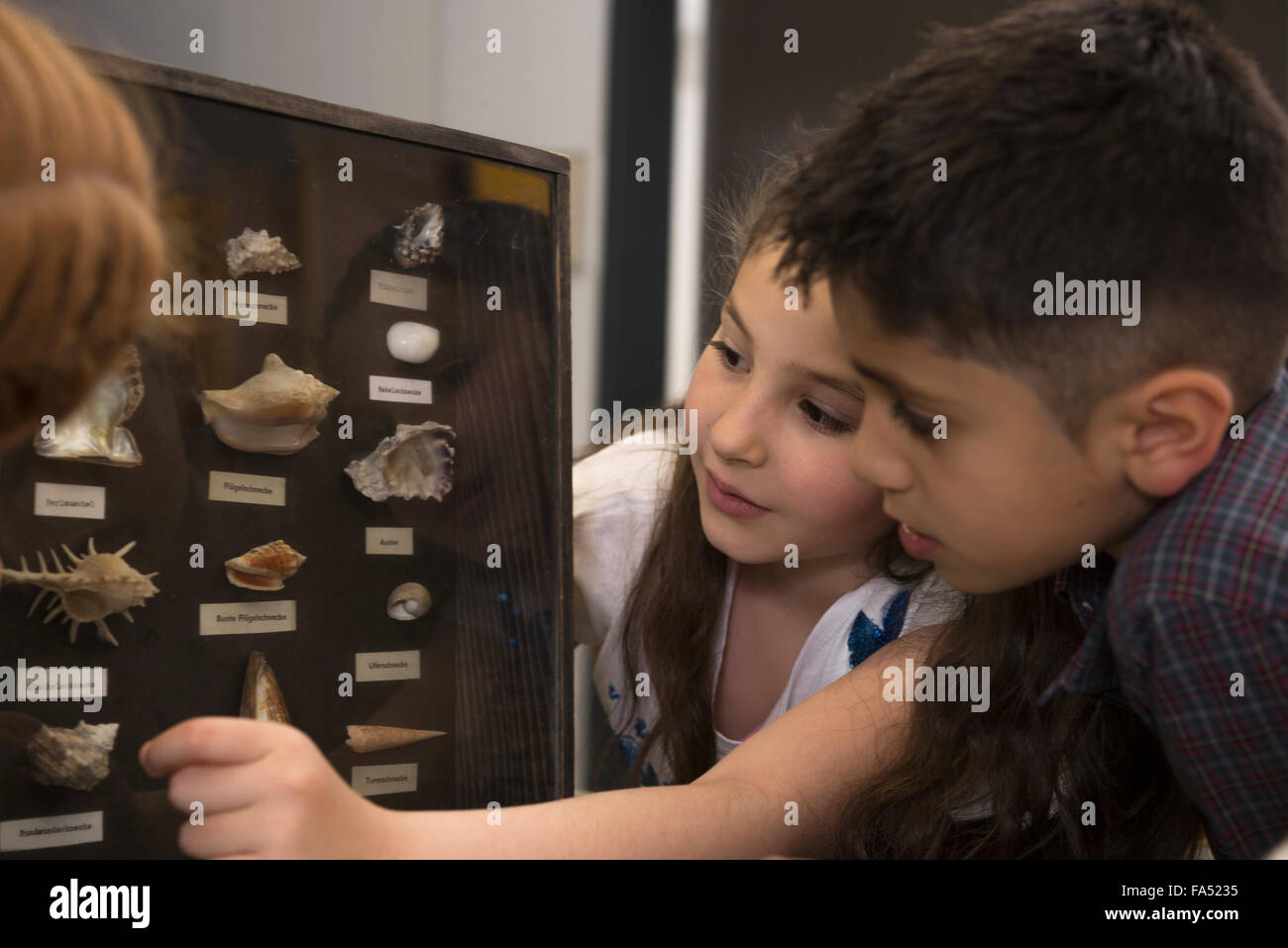 Students studying about seashells from display cabinet,  Fürstenfeldbruck, Bavaria, Germany - Stock Image