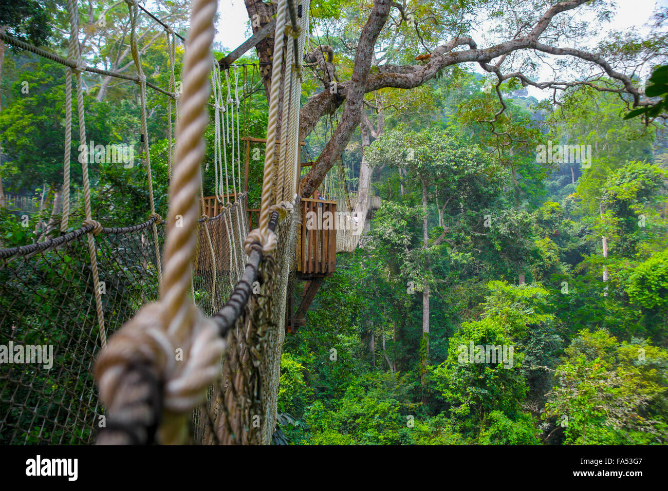Kakum National Park is a 375 square km national park located in the Central Region of Ghana Stock Photo