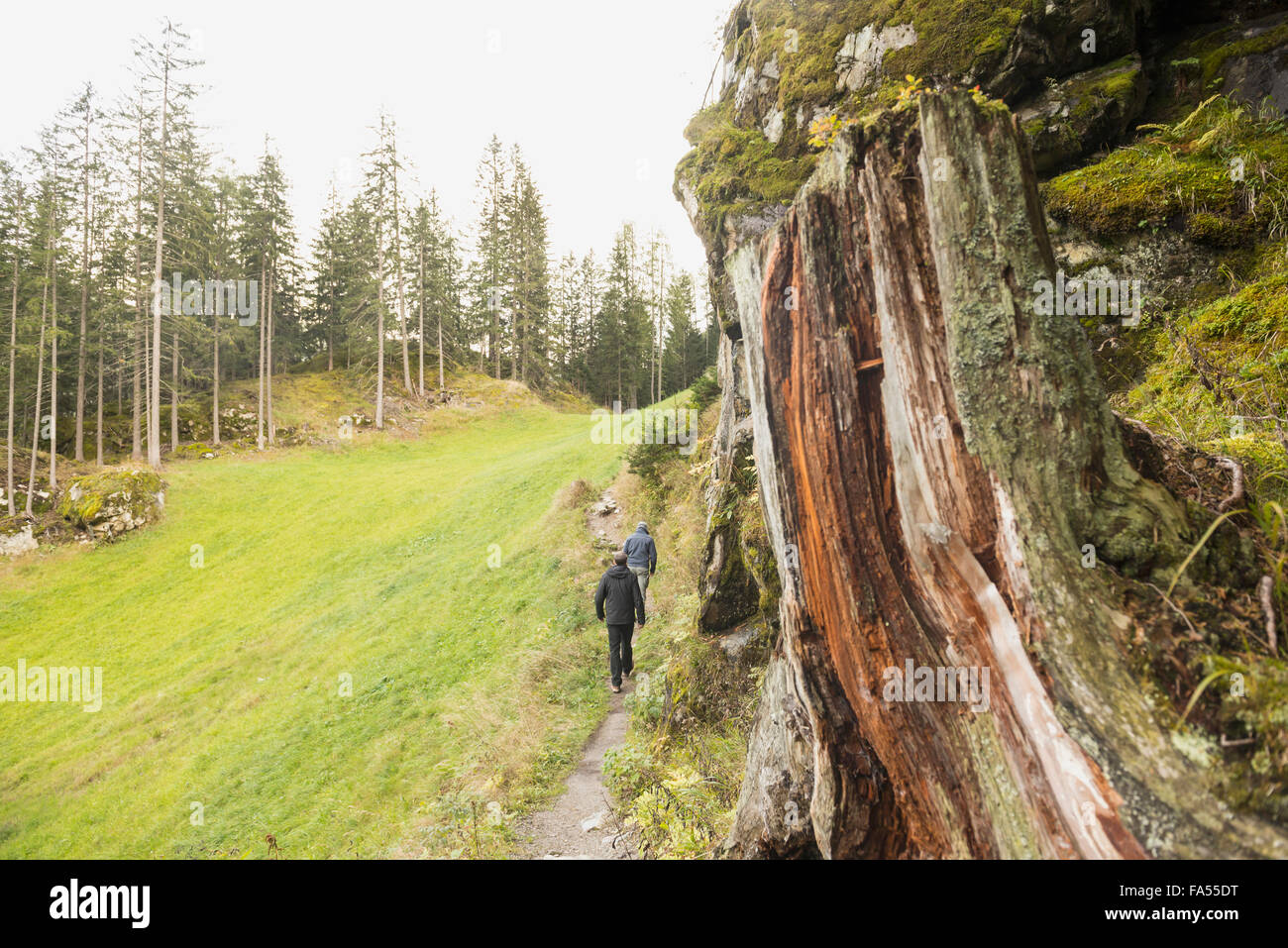 Two mature hikers walking in forest, Austrian Alps, Carinthia,  Austria - Stock Image