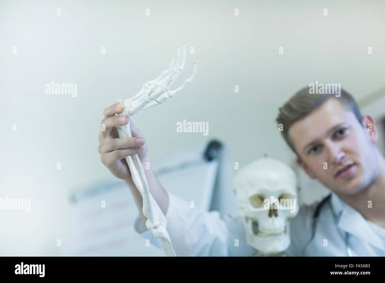 Portrait of a young doctor waving skeleton's hand in doctor's office, Freiburg Im Breisgau, Baden-Württemberg, - Stock Image