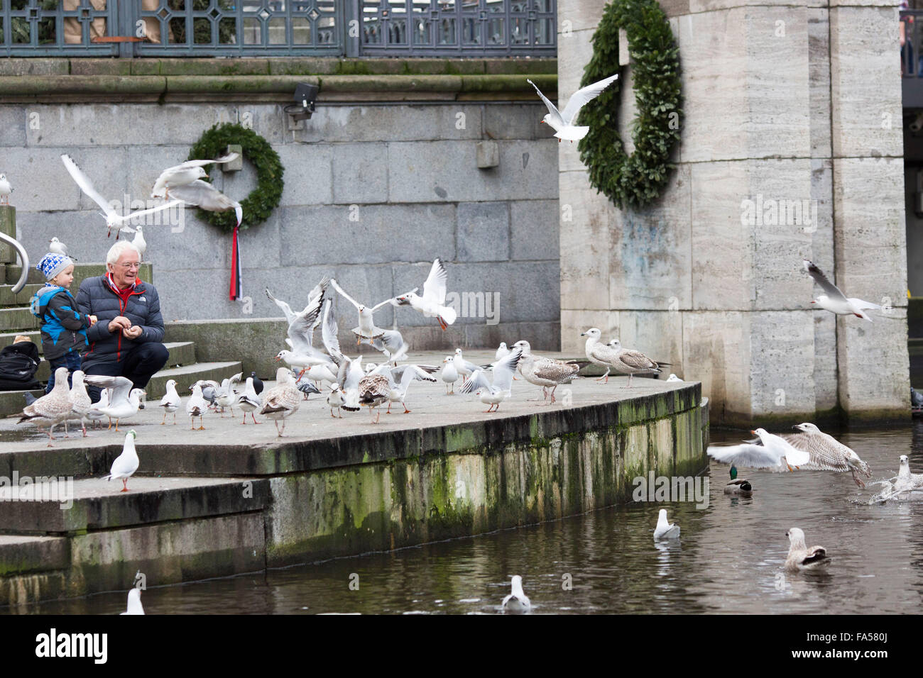 Hamburg Germany. An old man and a boy feed birds from the bank of the Kleine Alster near the Rathaus - Stock Image
