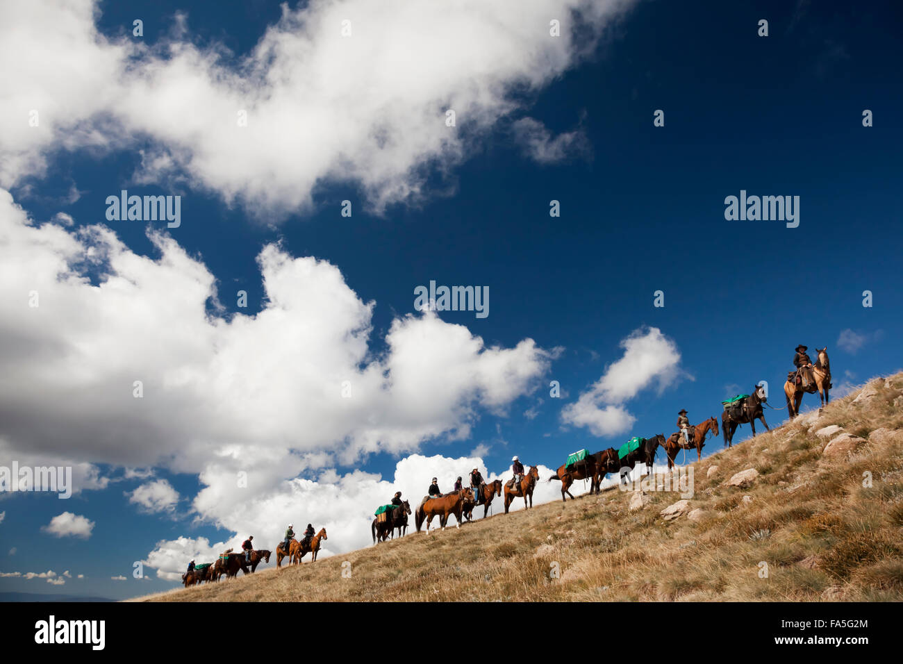 A train of riders and packhorses ascend Timms Spur to the Bogong High plains during a Bogong Horseback Adventure. - Stock Image