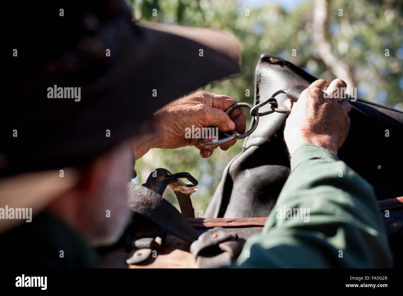 Fletch, an experienced Tasmanian horseman and staffer of Bogong Horseback Adventures, checks a packsaddle - Stock Image