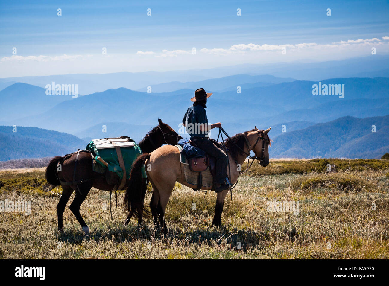Australian Stockman, Lin Baird, approaches Hell Gap near Mount Bogong in the Victorian High Country. - Stock Image