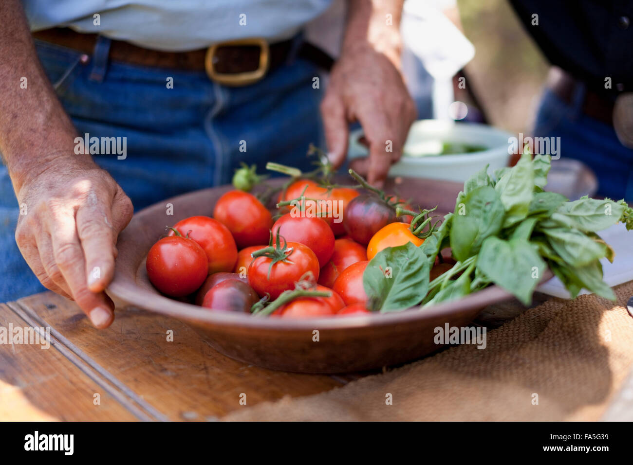 Fresh tomatoes and basil homegrown in the garden at Spring Spur are used for many recipes on Bogong Horseback Adventures. Stock Photo