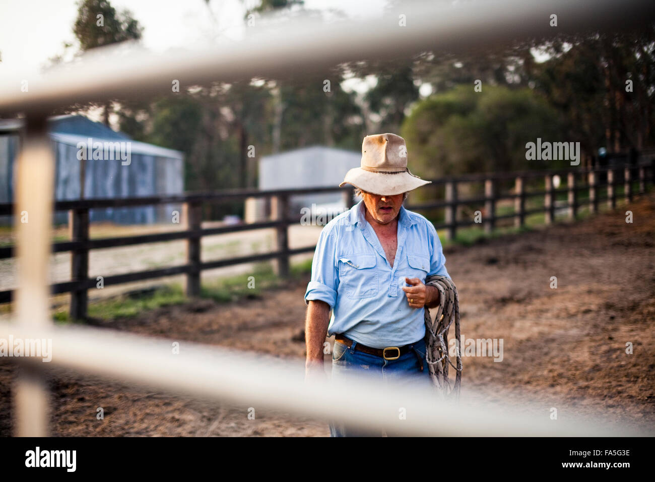 Australian stockman and High Country tourism entrepreneur, Steve Baird, in the horse yard at Spring Spur. - Stock Image